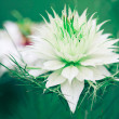 White flower — Foto Stock