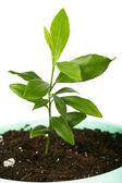 Petite plante isolée sur un blanc — Photo