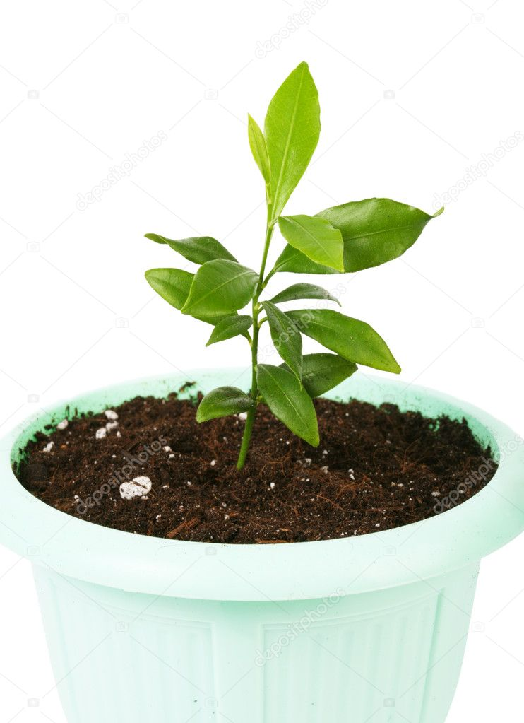 Small plant isolated on a white  Stock Photo #1978095
