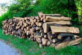 Cord of Wood — Stock Photo