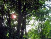 Sun through leaves — Stock Photo
