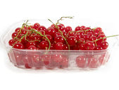 Currant in the box — Stock Photo