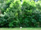 Spider net — Stock Photo