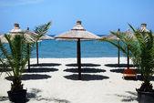 Beach with palms and sunshade — Stock Photo