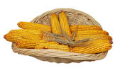 Wheat and corn in basket — Stock Photo