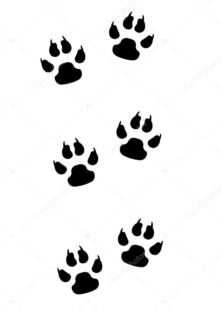 real animal footprints
