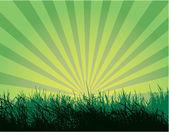 Nice grass illustration — Stock Vector