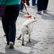 Foto Stock: Dog walk