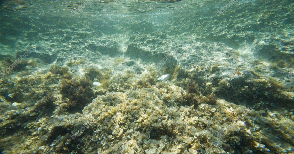 Underwater Sea Floor Rocks  Free video on Pixabay