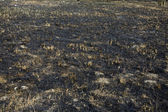 Burned grass and ground smut — 图库照片