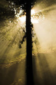 Light tree - sun rays — Stock Photo