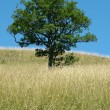 Stock Photo: Lone tree