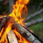 Campfire — Stock Photo #1644486