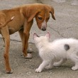 Stock Photo: Skinny Dog And White Cat