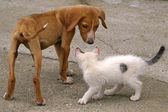 Skinny Dog And White Cat — Stock Photo