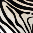 Royalty-Free Stock Photo: Zebra skin