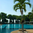 Swimming pool with palm tree - Stock Photo