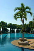 Swimming pool with palm tree — Foto de Stock