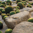 Cactus and stone Garden - Stock Photo