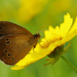 Beauty butterfly on a yellow flower — Stock Photo