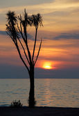 Amazing sunset behind tropical tree — Stock Photo