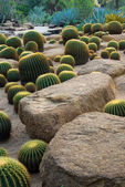 Cactus and stone Garden — Foto de Stock