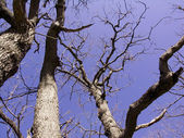 Violet sky — Stock Photo
