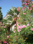 Adriatische bloemen — Stockfoto