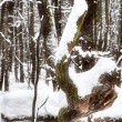 Winter in the forest. — Stock Photo