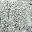 Snowbound branches — Stock Photo