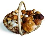 Basket of mushrooms — Stock Photo