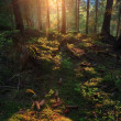 Sunset in forest — Stock Photo