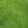Grass_texture — Stock Photo #1949152