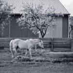 Horse in pasture — Stock Photo #1709796