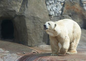 Urso — Fotografia Stock