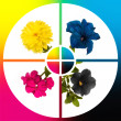 collage cmyk flowers — Stock Photo #1705567