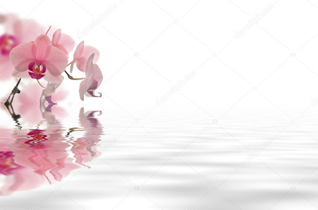 Flower floating in water stock photo scyther5 1705091 for Floating flowers in water