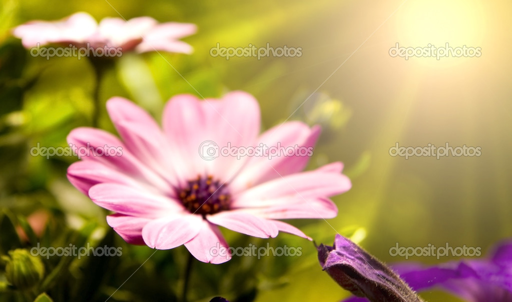 Spring flowers in beautiful background — Stock Photo #1705625