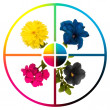 Collage CMYK flowers — Stockfoto