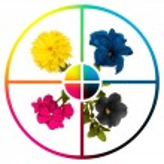 Collage CMYK flowers — Stock Photo
