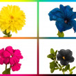 Collage CMYK flowers — Stock Photo