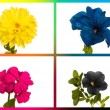 collage cmyk flowers — Stock Photo #1724767