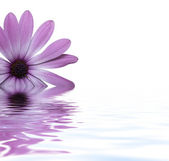 Flower floating in water — Stock Photo