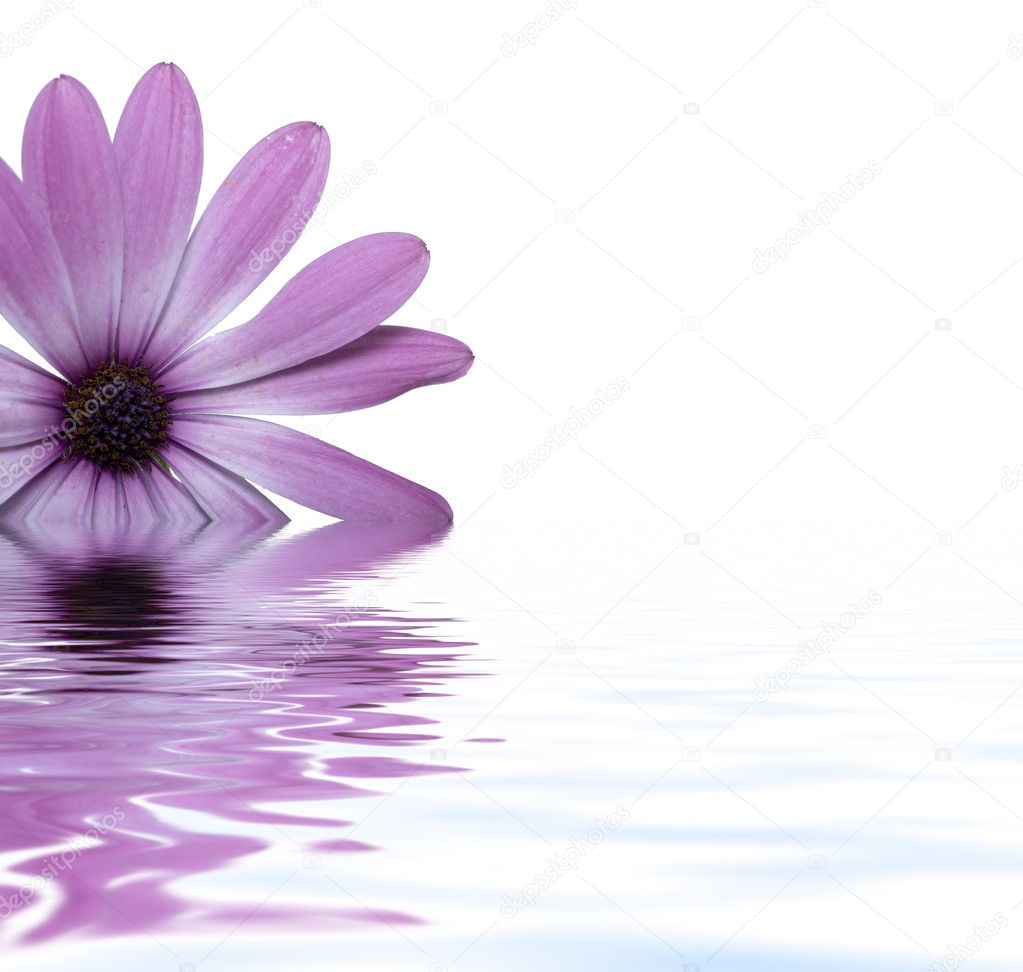 Flower floating in water stock photo scyther5 1724171 for Floating flowers in water