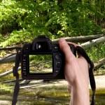 Photo nature — Stock Photo