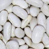 Bulk Food: White Beans — Stock Photo