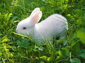 Small white rabbit — Stock Photo