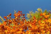 Jesienne drzewo bukowe 6 — Zdjęcie stockowe