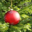 Christmas tree with baubles — Stock Photo