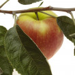 Stock Photo: Red wet apple with leaf